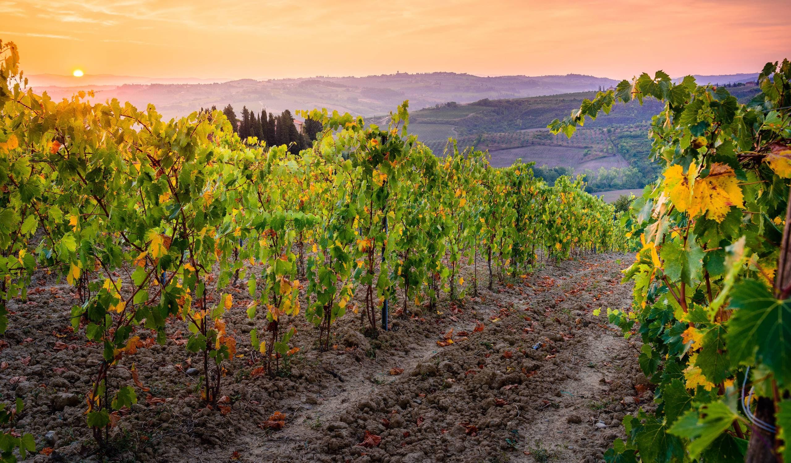 Tenuta Maiano Wine