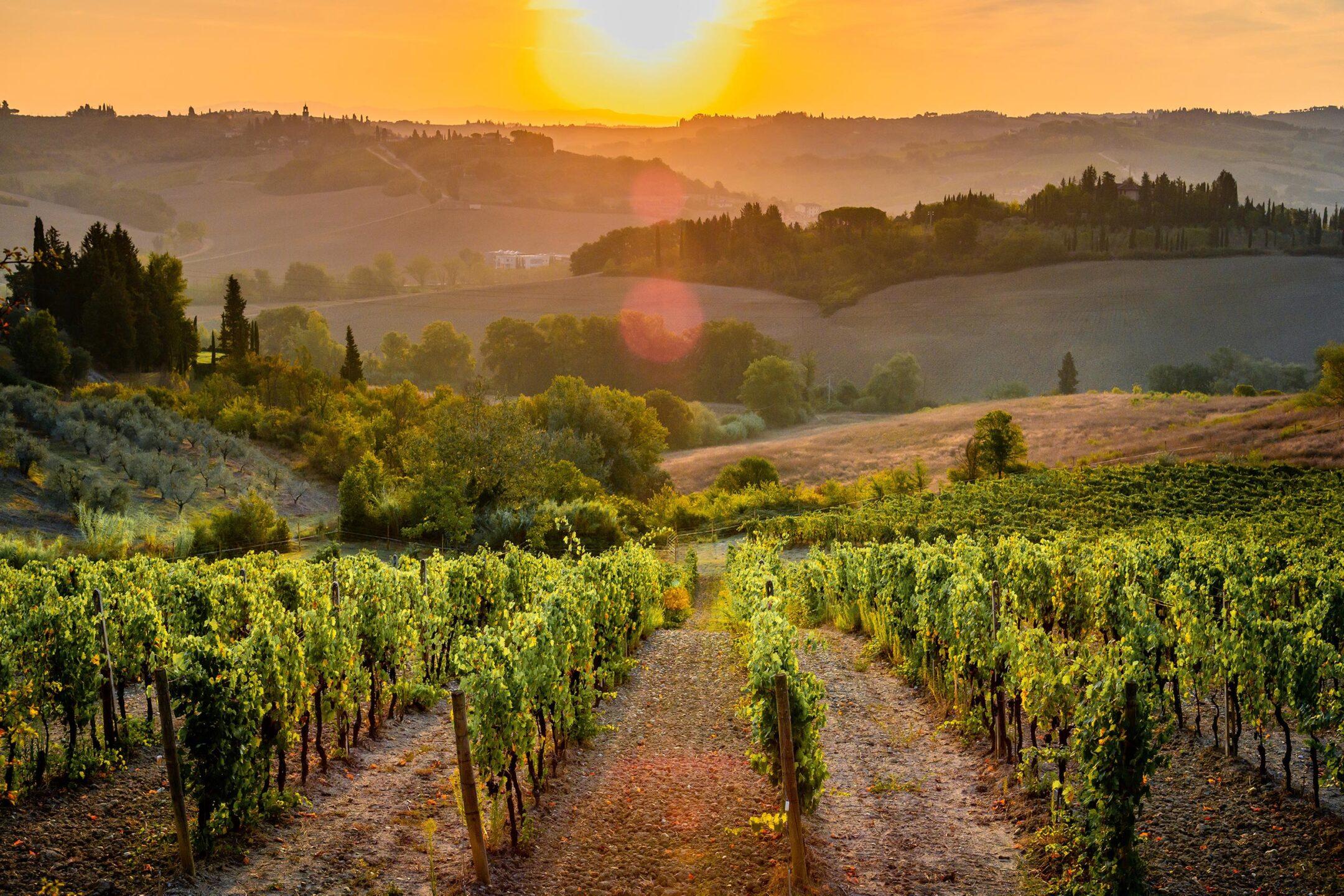 Le viti di Montespertoli e di Scansano danno origine ai nostri vini - Le viti di Montespertoli e di Scansano danno origine ai nostri vini
